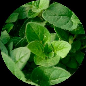 Blog da Plantei