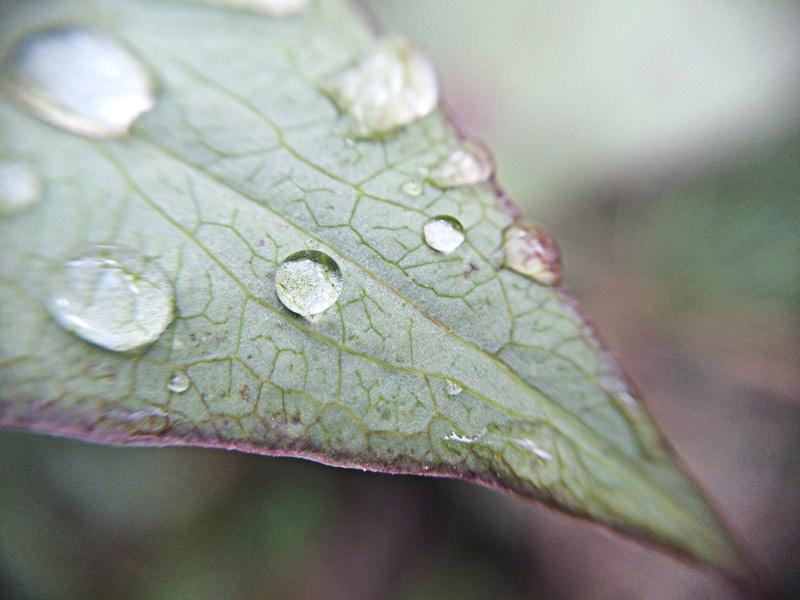 13 ideias e ferramentas que economizam a água no jardim