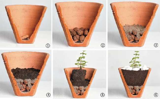 Qual a maneira correta de montar um vaso para o plantio?