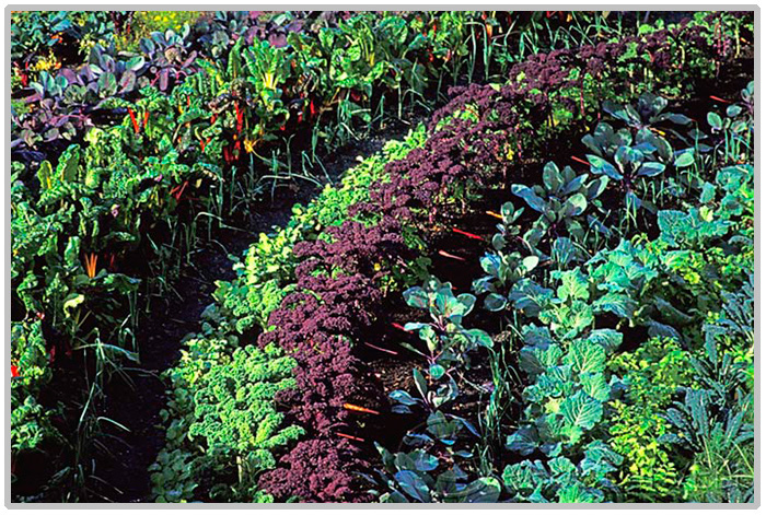 Aprenda como preparar uma horta