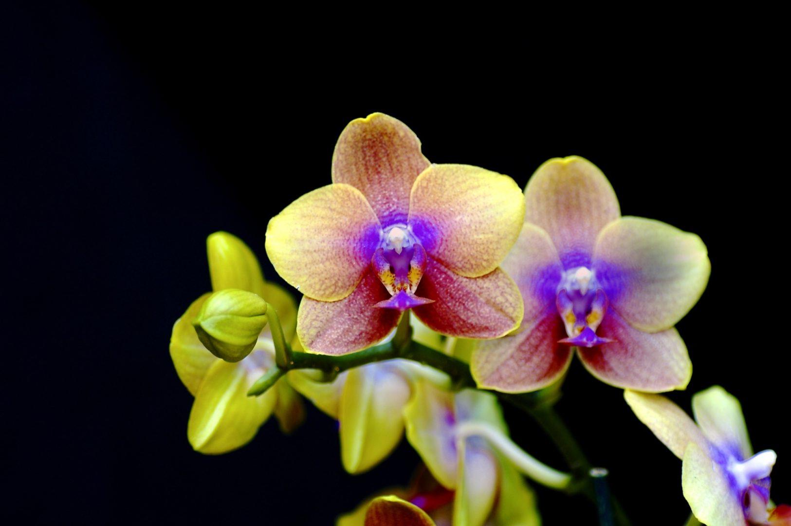 Os 3 erros mais comuns no cuidado com orquídeas