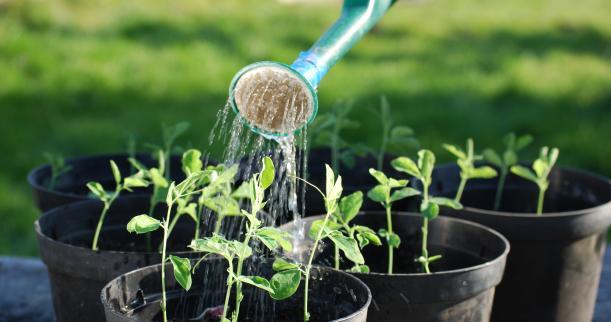 Entenda a sigla NPK e saiba como esses elementos afetam suas plantas