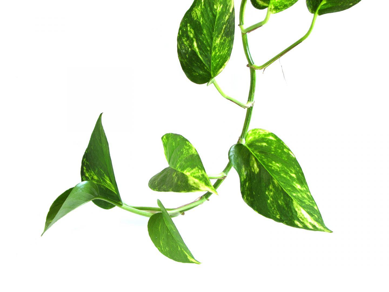 5 Plantas que purificam o ar