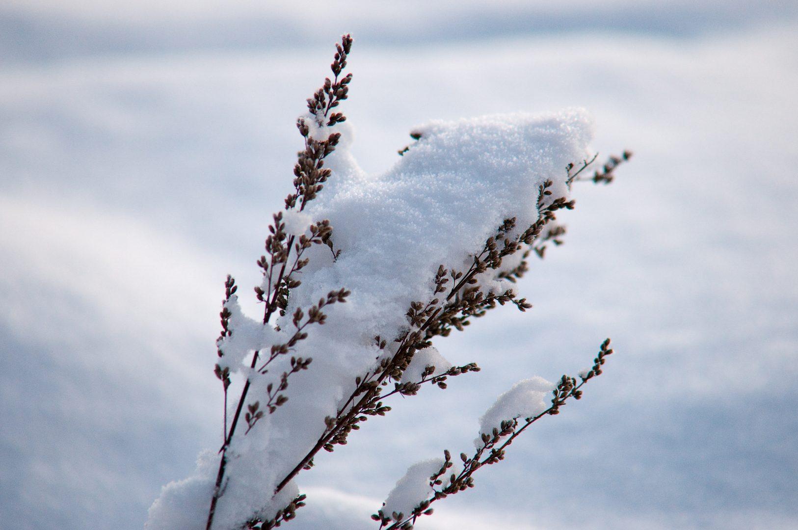 Sete cuidados especiais para ter com as plantas no inverno