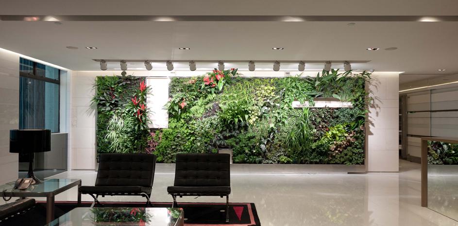A planta certa para cada lugar da casa
