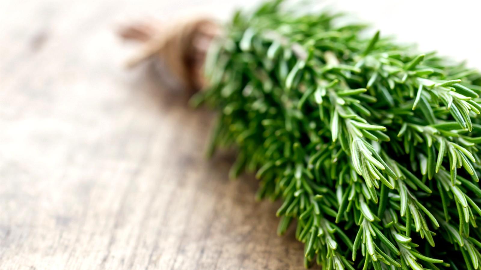 como cultivar alecrim