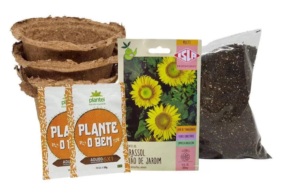 como plantar e cultivar girassol