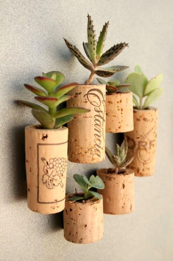 suculenta-plantada-na-rolha-decoração