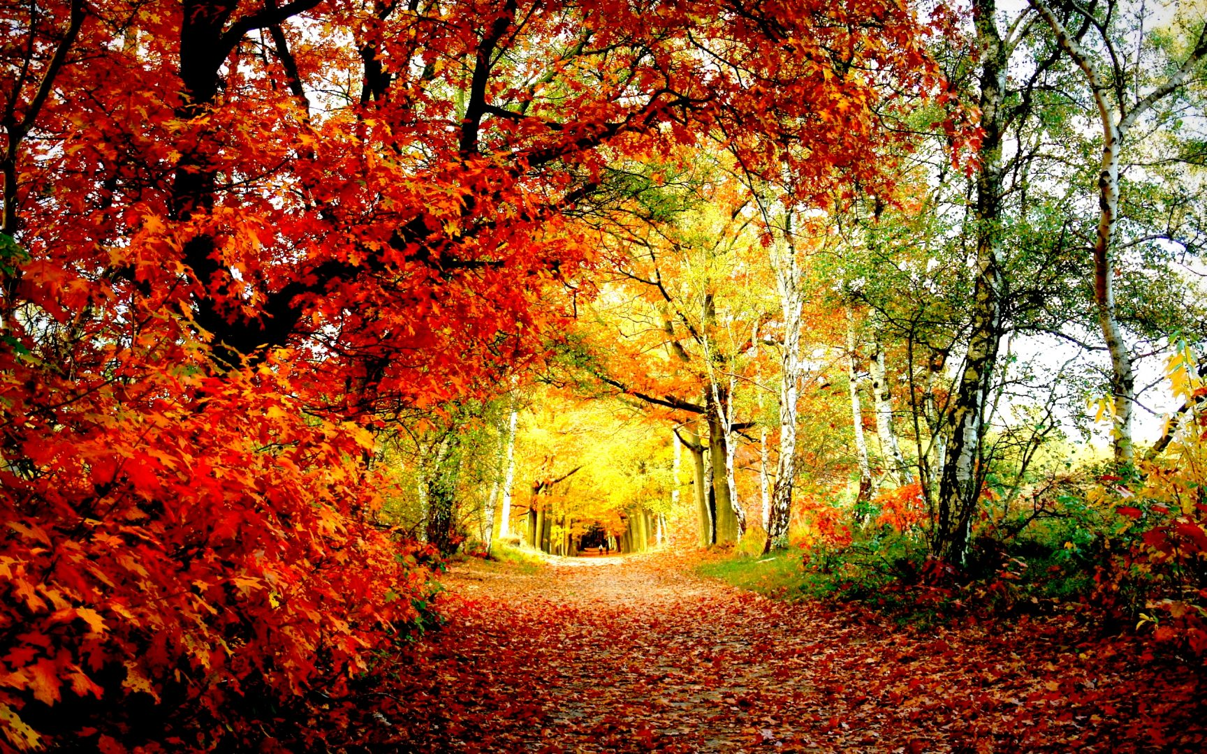 Conheça 10 incríveis e apaixonantes túneis de árvores