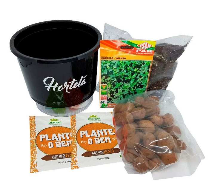 plantar e cultivar hortelã