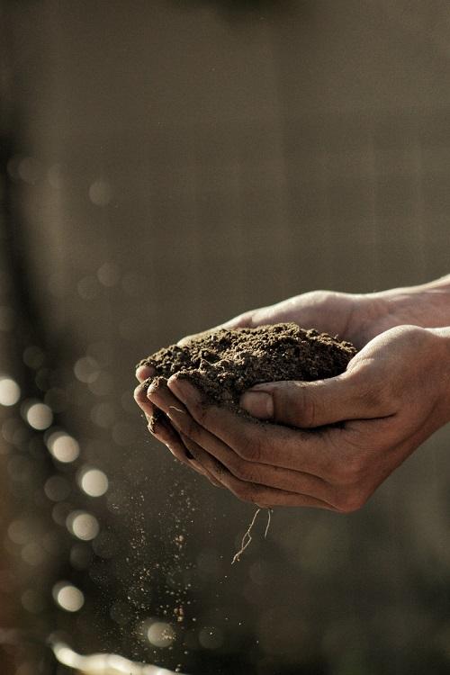preparo do solo para plantio de hortelã