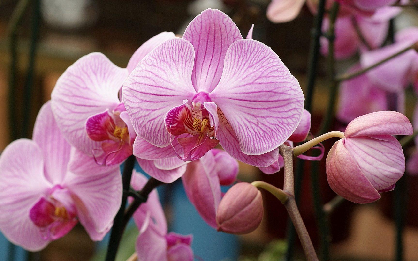 Conheça as 10 orquídeas mais reais que existem
