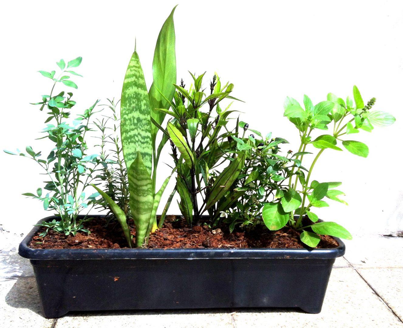 Faça um vasinho com 7 ervas para energizar o ambiente