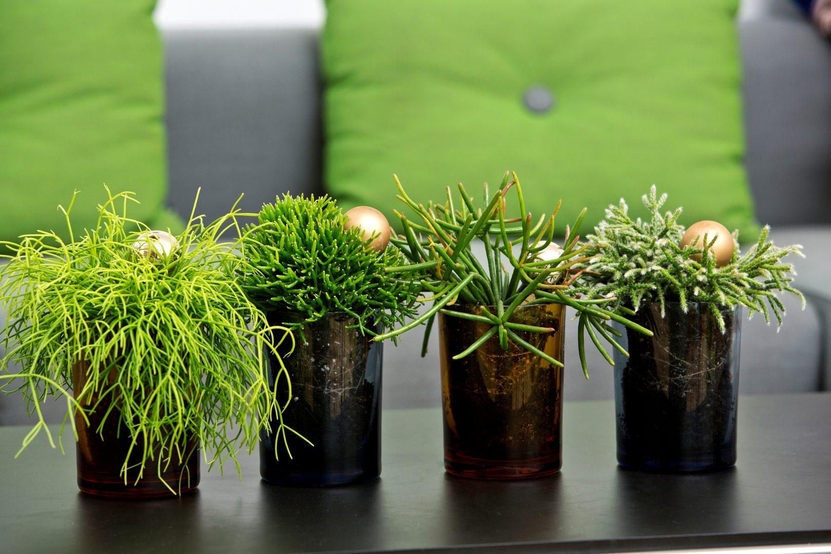 Alegre sua mesa de trabalho com plantas
