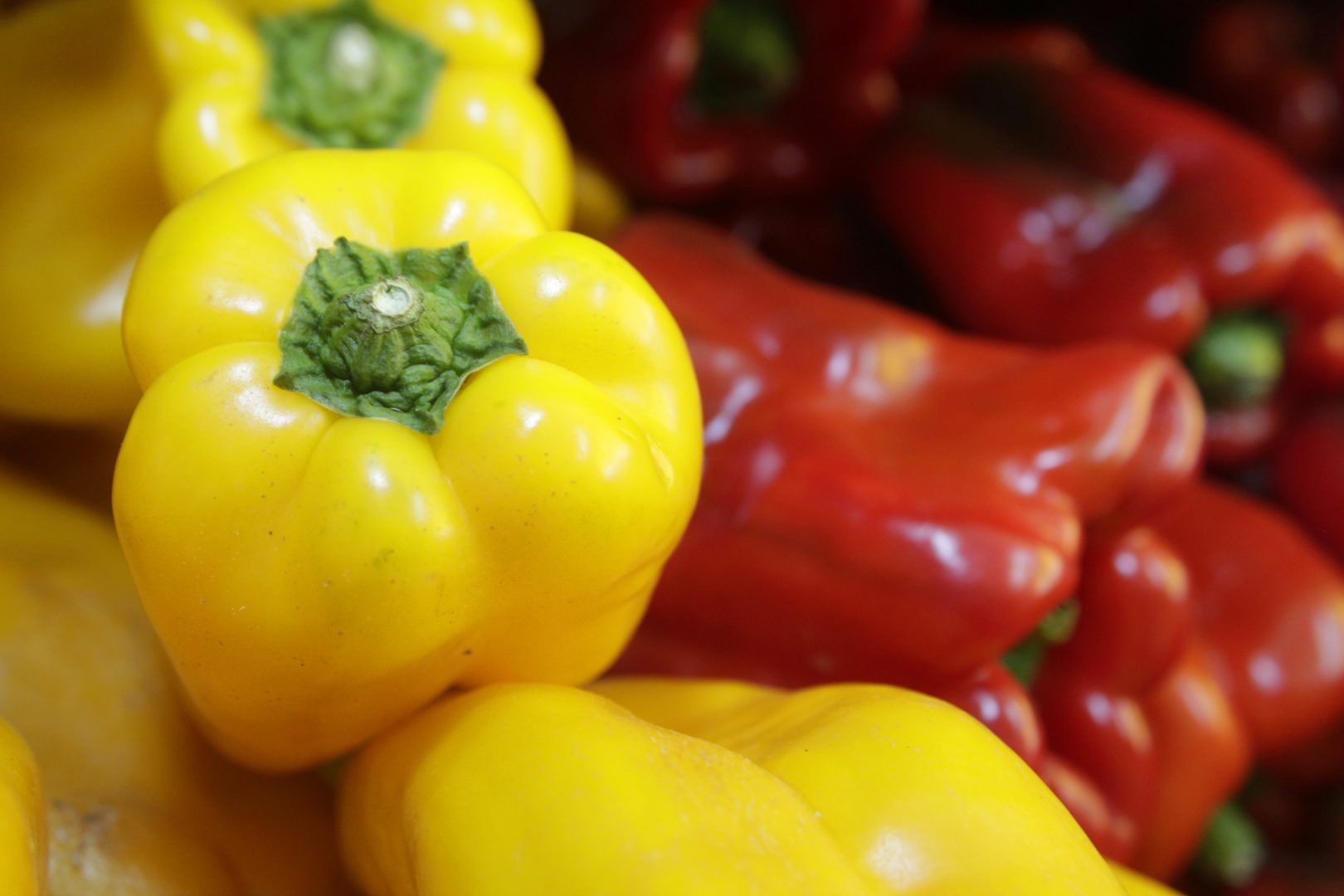 cultivar pimentão