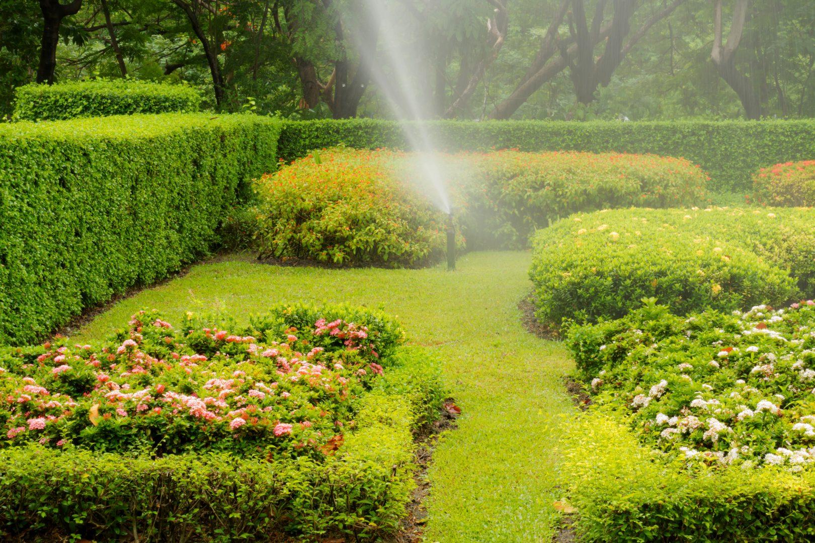 5 dicas para preservar seu jardim durante períodos de ausência