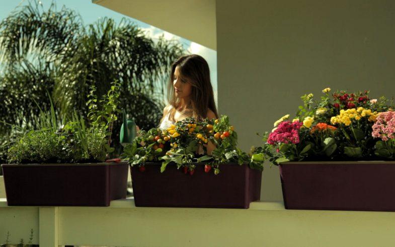 Plantando na Horta Autoirrigável Cultive Anti Dengue