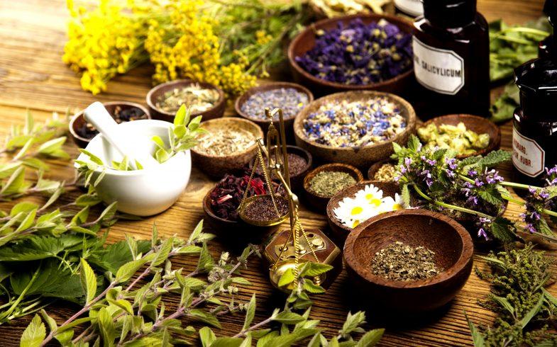 15 plantas medicinais que você pode ter no jardim