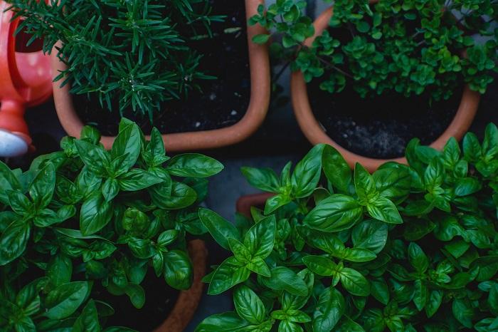 plantas amigas