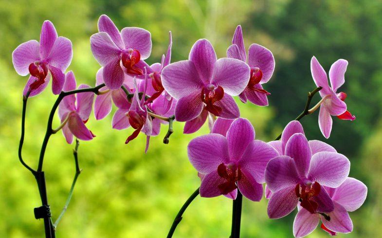 Como transplantar sua orquídea?