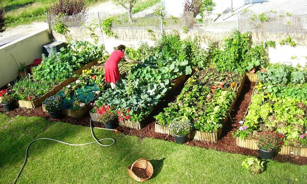 Família produz 3 toneladas de alimentos orgânicos no próprio quintal