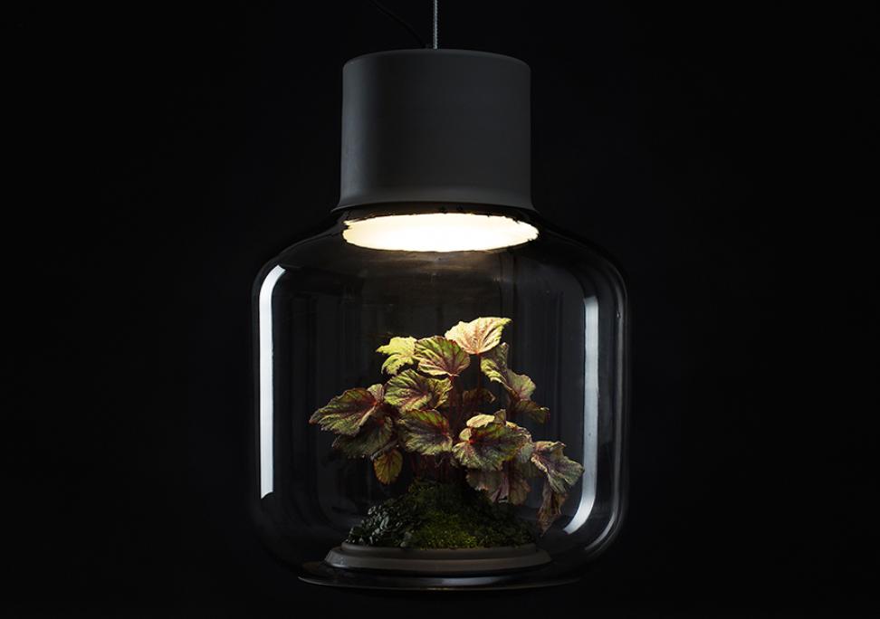 Luminária cria ambiente ideal para manter plantas em locais fechados
