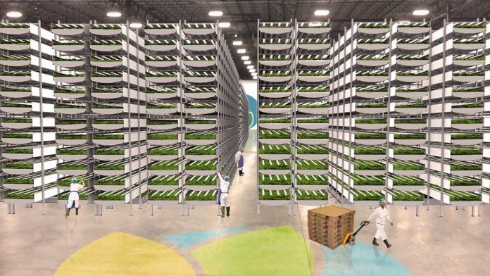 Fazenda vertical usará 95% menos água e terá produção 75 vezes maior que o método tradicional