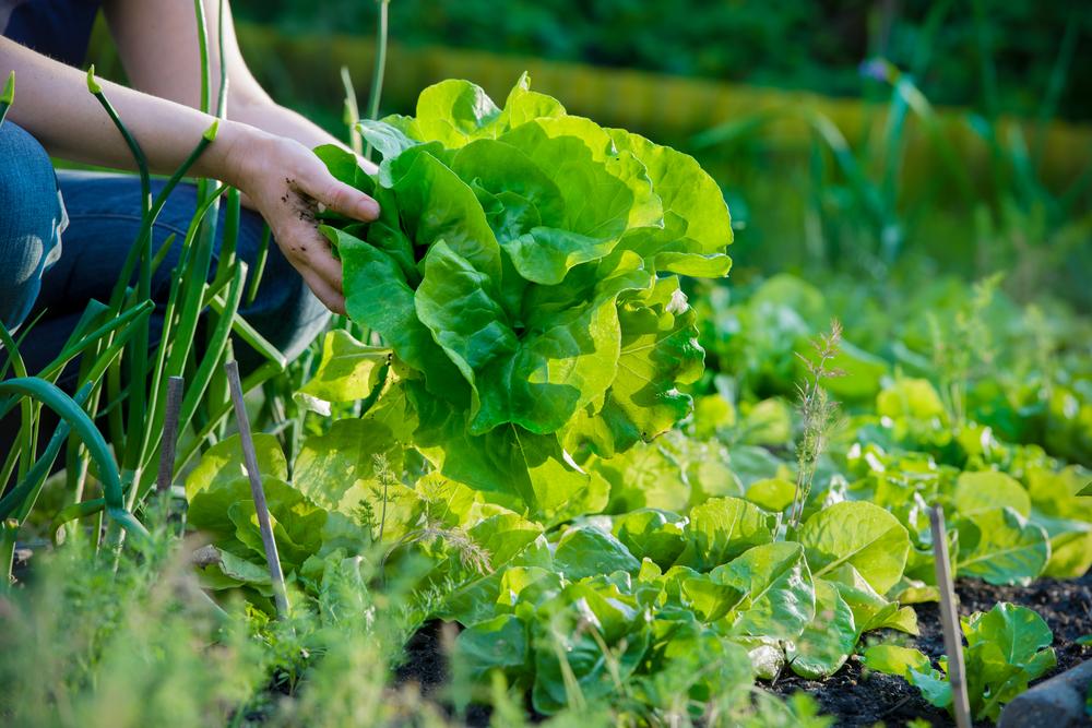 SP terá mini-curso grátis de horta caseira e comunitária