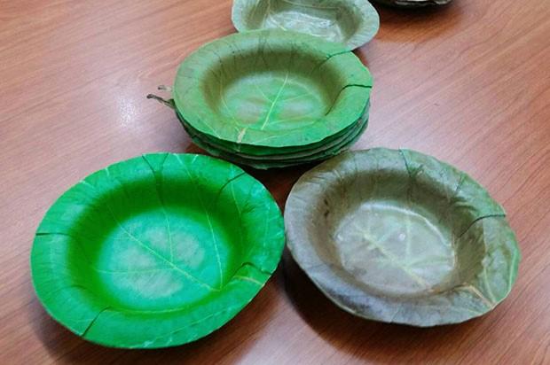 Universidade desenvolve pratos descartáveis feitos de folhas