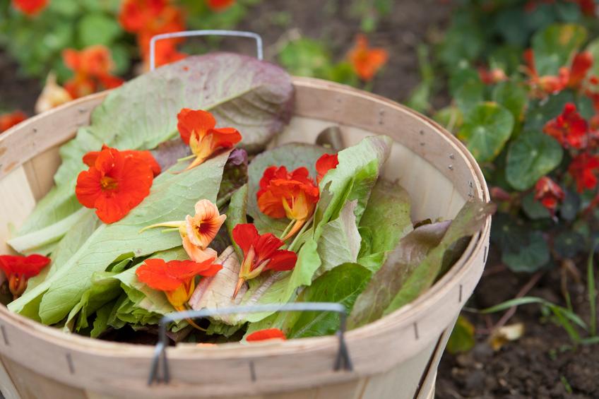 SP terá oficina gratuita sobre plantas alimentícias não convencionais (PANCs)