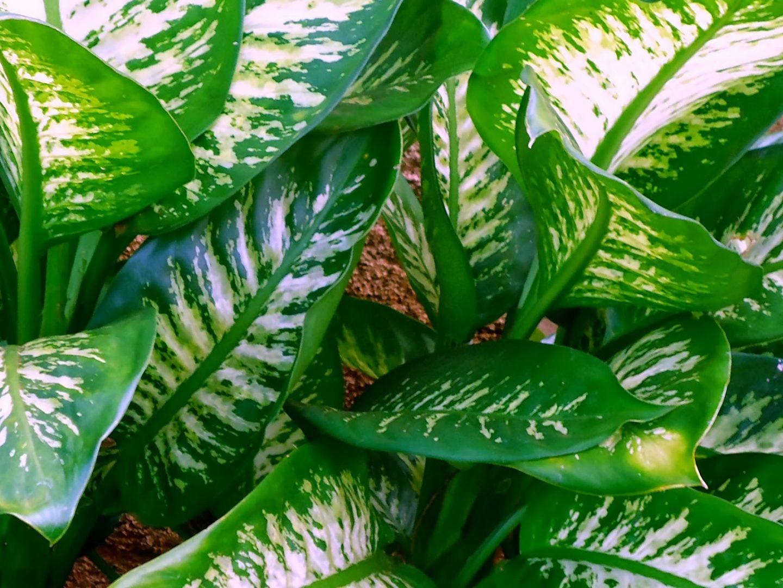 plantas para locais sem sol