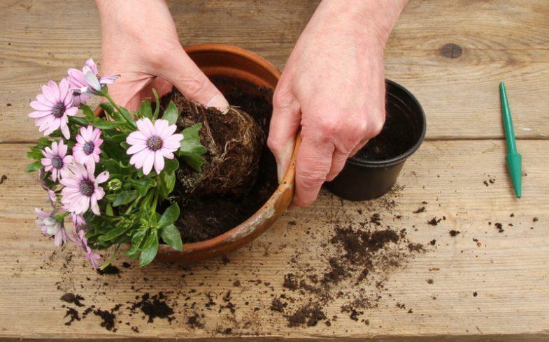 Adubação na jardinagem é tema de palestra gratuita em SP