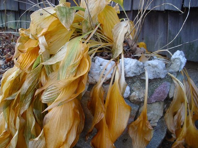 Como recuperar uma planta seca