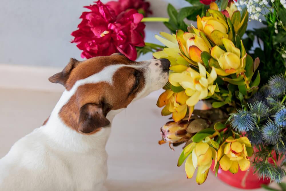 plantas tóxicas para cães e gatos