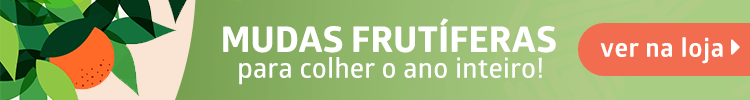 mudas frutíferas loja plantei