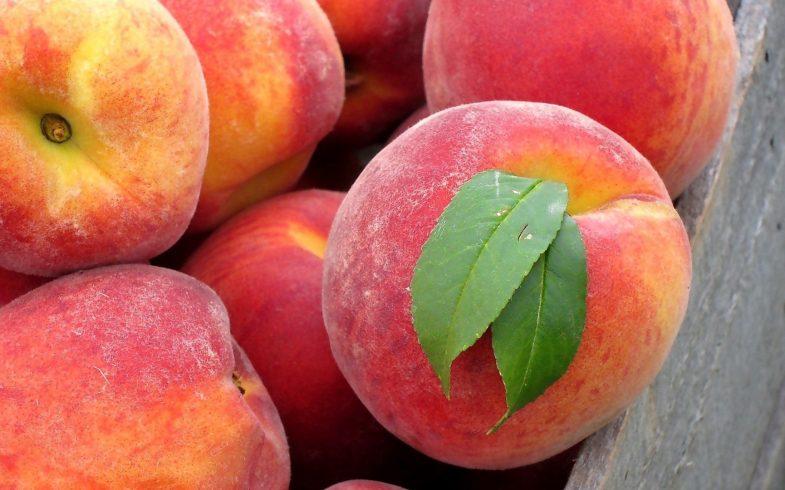 5 frutas ideais para consumir na primavera