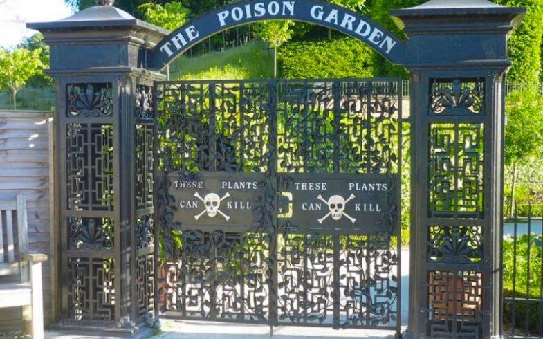 Poison Garden: o jardim mais perigoso do mundo que só cultiva espécies venenosas