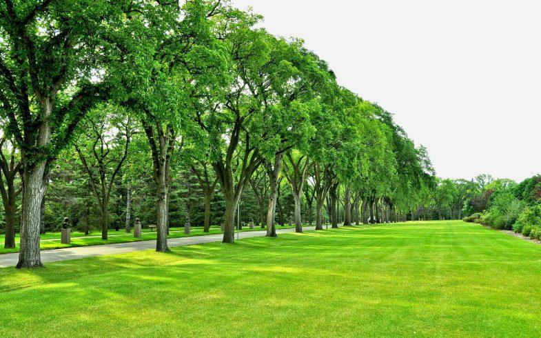 Cuidados com os gramados em época de baixa umidade