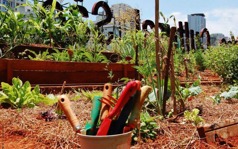 SP tem 3ª edição do Festival de Agricultura Urbana