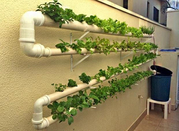 Como fazer uma horta hidropônica em casa