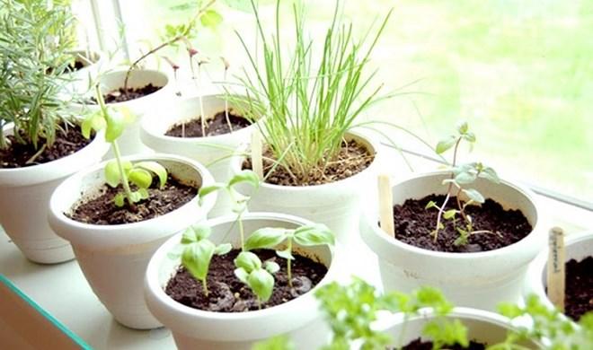 Hortas em apartamentos: 10 ervas, condimentos e temperos para cultivar
