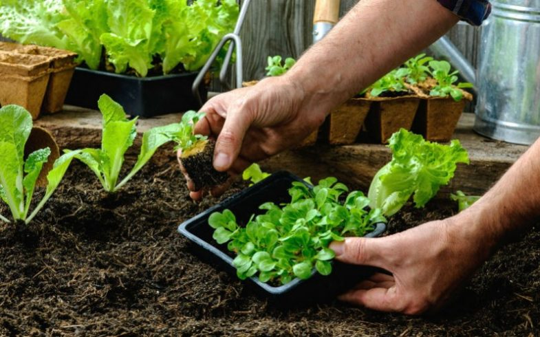 6 itens necessários para ter uma horta em casa