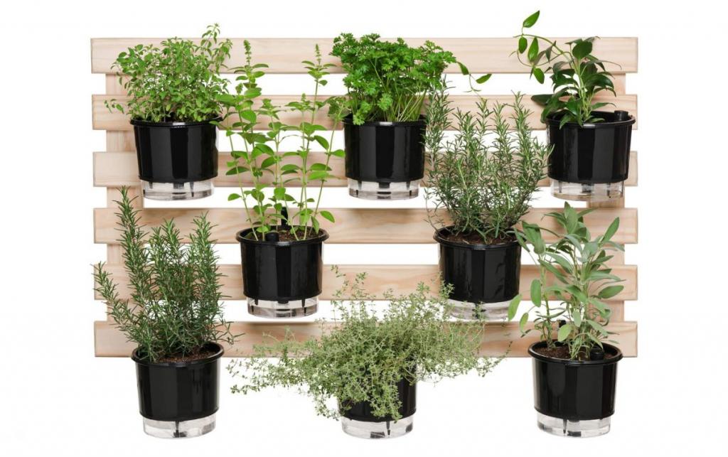 horta em casa - horta vertical