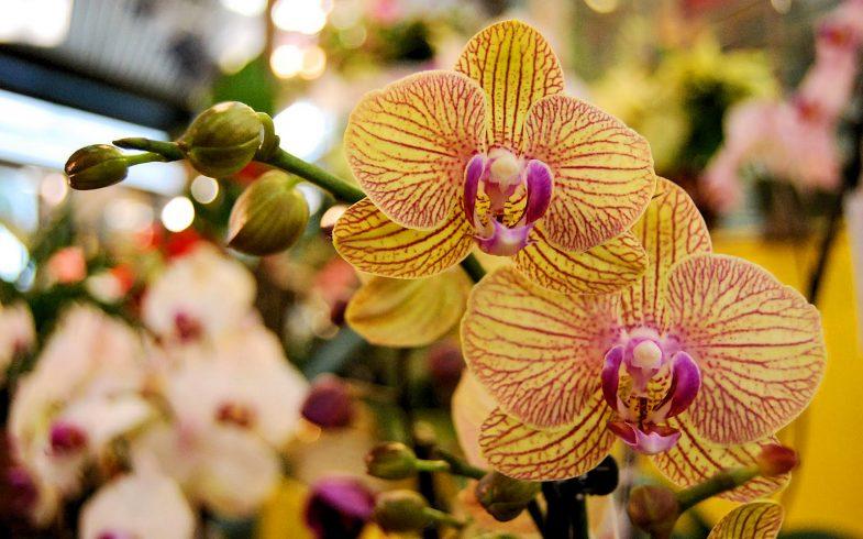 Como cultivar orquídeas da maneira correta