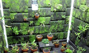 Tudo o que você precisa saber sobre cultivo indoor
