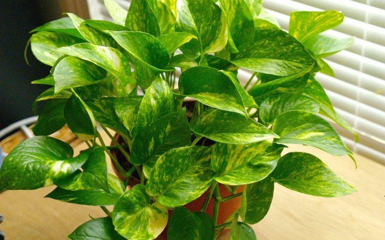 10 plantas que não precisam de sol frequente