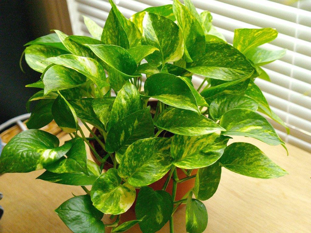 10 plantas que n o precisam de sol frequente blog plantei for Plantas verdes de interior
