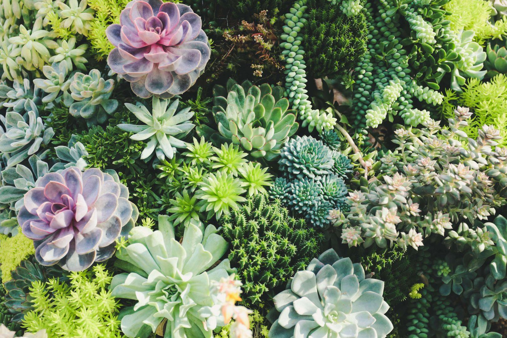 Como Cuidar De Suculentas Corretamente Blog Plantei