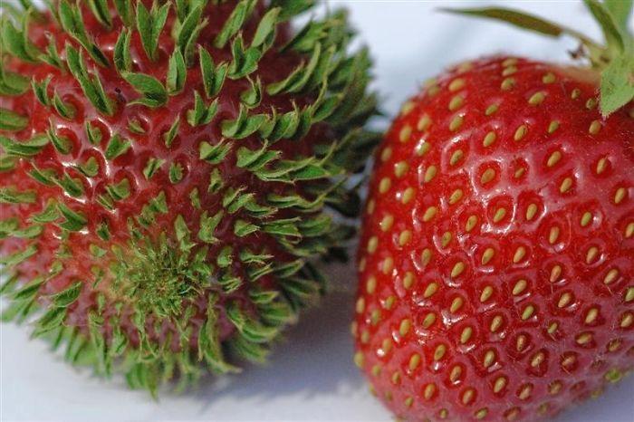 10 imagens para você ver o que acontece com frutas e vegetais que começam brotar mais cedo