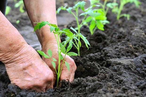 Como realizar corretamente o plantio de mudas de plantas
